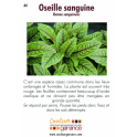 Oseille sanguine